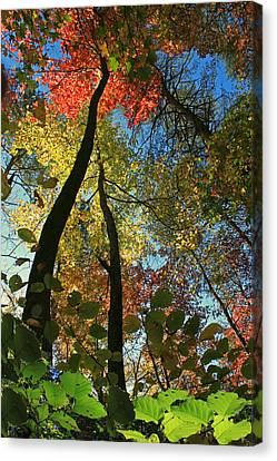 Autumn Light Canvas Print by Dave Alexander