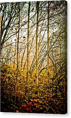 autumn Lines Canvas Print by Maggie Terlecki