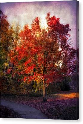 Autumn Maple 2 Canvas Print by Jessica Jenney