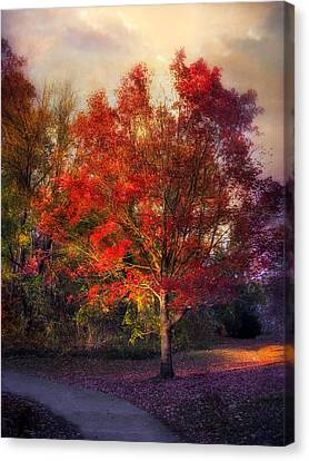 Autumn Maple Canvas Print by Jessica Jenney
