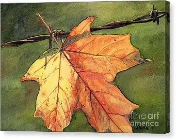 Autumn Maple Leaf Canvas Print by Antony Galbraith