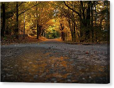 Autumn Mornings Canvas Print by Sue OConnor