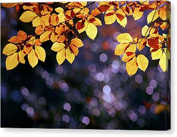 Autumn Party Canvas Print by Roeselien Raimond