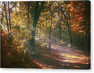 Autumn Path Canvas Print by Scott Norris