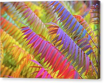Autumn Rainbow Of Leaves 1 Canvas Print by Jenny Rainbow
