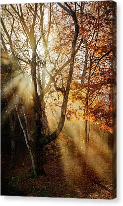 Autumn Rays Canvas Print by Susan McMenamin