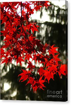 Autumn Red Canvas Print by Jeff Breiman