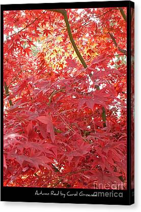 Autumn Red Poster Canvas Print by Carol Groenen