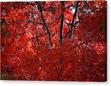 Autumn Red Trees 2015 Canvas Print by Thomas Woolworth