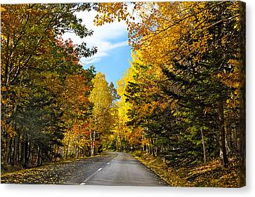 Autumn Scenic Drive Canvas Print by George Oze