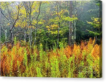 Autumn Splendor Canvas Print by Thomas R Fletcher