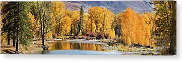 Autumn Stream Canvas Print by Mary Jo Allen