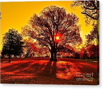 Autumn Sun And Shadows Canvas Print by E Robert Dee