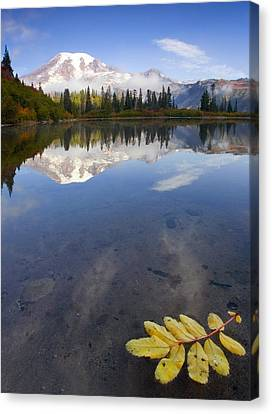 Autumn Suspended Canvas Print by Mike  Dawson