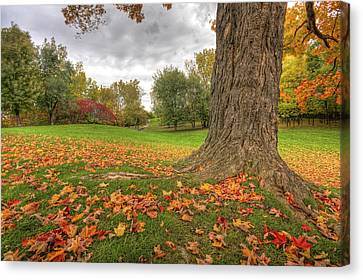 Autumn Tale Canvas Print by Mircea Costina Photography