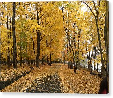 Autumn Trail Rockland Lake Ny Canvas Print by Richard Bryce and Family