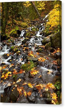 Autumn Tumbles Down Canvas Print by Mike  Dawson