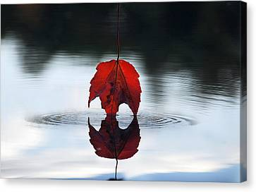 Autumns Final Descent Canvas Print by William Carroll