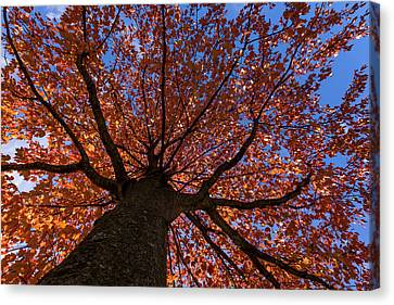 Autumns Tree New Jersey Canvas Print by Terry DeLuco