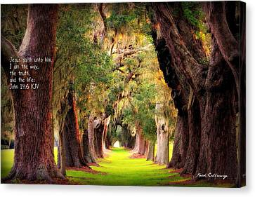 Avenue Of Oaks 2 I Am The Way Canvas Print by Reid Callaway