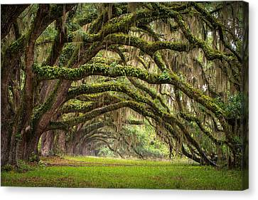 Avenue Of Oaks - Charleston Sc Plantation Live Oak Trees Forest Landscape Canvas Print by Dave Allen