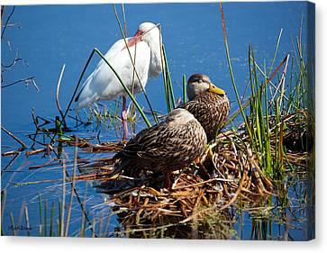Avian Siesta Time At Green Cay Boynton Beach Florida Canvas Print by Michelle Wiarda