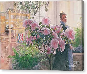 Azalea Canvas Print by Carl Larsson