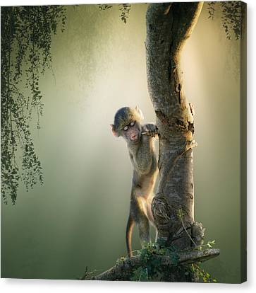 Baby Baboon In Tree Canvas Print by Johan Swanepoel