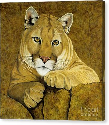 Baby Face Canvas Print by Lawrence Supino