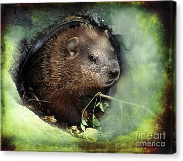 Baby Groundhog Canvas Print by Elaine Manley
