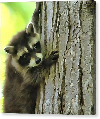 Baby Raccoon In A Tree Canvas Print by Dan Sproul
