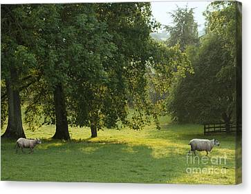 Back From The Meadow Canvas Print by Angel  Tarantella