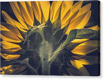 Back Lit And Back Facing Canvas Print by Chris Fletcher