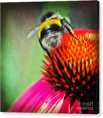 Back Side - Bumble Bee Canvas Print by Angela Doelling AD DESIGN Photo and PhotoArt