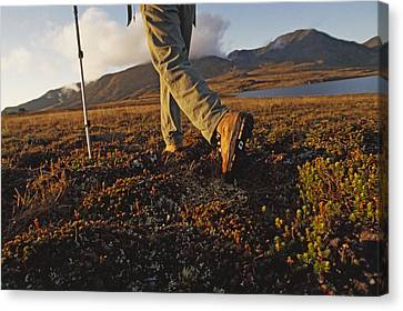 Backpacker Hikes Across Tundra In Logan Canvas Print by Gordon Wiltsie