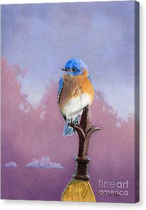 Backyard Bluebird Canvas Print by Sarah Batalka