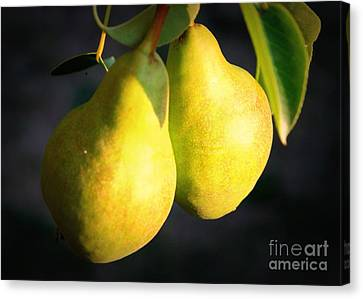 Backyard Garden Series - Two Pears Canvas Print by Carol Groenen