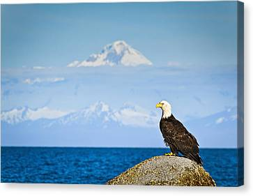Bald Eagle Perched On A Rock Canvas Print by Sunny Awazuhara- Reed