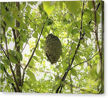 Bald-faced Hornets Nest Canvas Print by Patti Whitten
