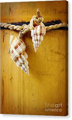 Bamboo And Conches Canvas Print by Carlos Caetano