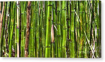 Bamboo Canvas Print by Dustin K Ryan
