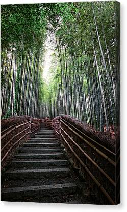 Bamboo Forest Of Japan Canvas Print by Daniel Hagerman