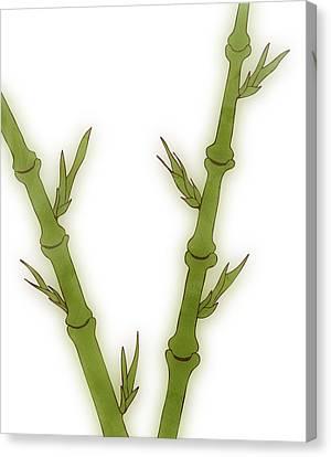 Bamboo Canvas Print by Frank Tschakert