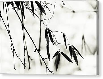 Bamboo Leaves 1. Black And White Canvas Print by Jenny Rainbow