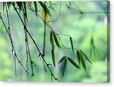 Bamboo Leaves 1 Canvas Print by Jenny Rainbow