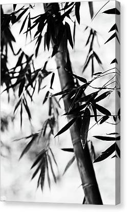 Bamboo Leaves. Black And White Canvas Print by Jenny Rainbow