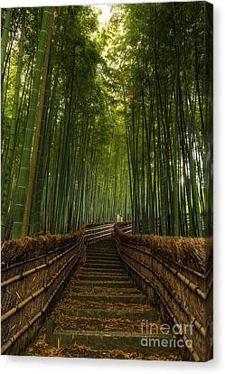 Bamboo Steps Canvas Print by Wietse Michiels