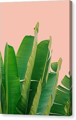 Banana Leaves Canvas Print by Rafael Farias