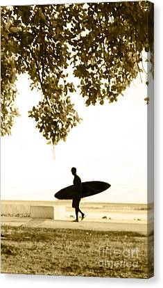 Banyan Surfer - Triptych  Part 3 Of 3 Canvas Print by Sean Davey