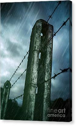 Barbed Wire Fence Canvas Print by Carlos Caetano